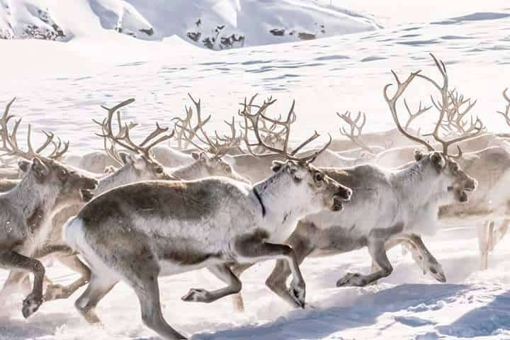 "When caribou reindeer migrate, the alpha leaders of the pack ""move the middle."" The majority of the pack are not high-performers or stragglers; and so the pace that must be set must be for the benefit of the middle majority; not too fast, not too slow."